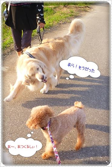 2012,10,4お散歩5