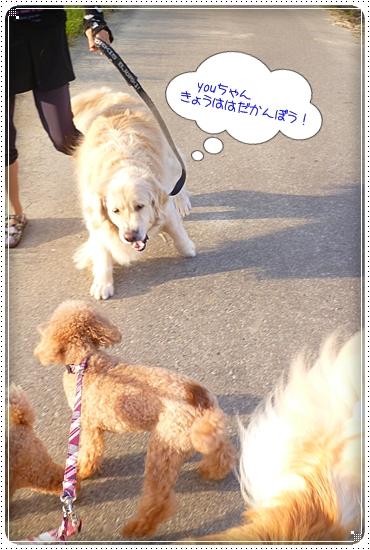 2012,10,4お散歩2