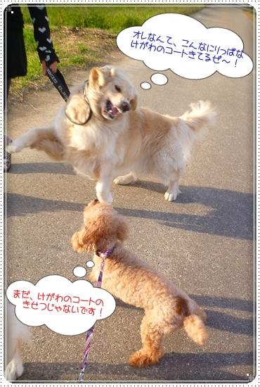 2012,10,4お散歩4