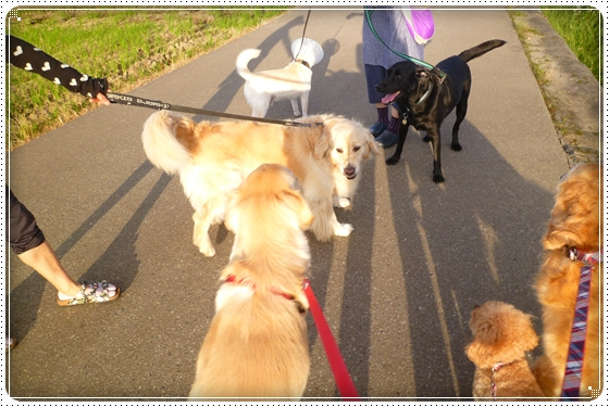 2012,10,4お散歩7