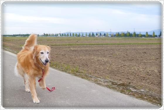 2012,10,17お散歩8
