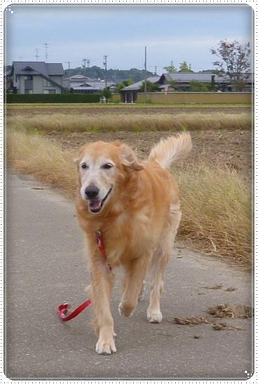 2012,10,17お散歩7