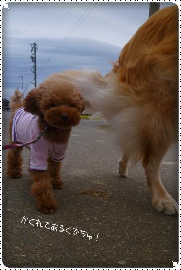 2012,10,17お散歩6