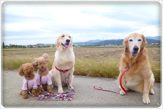 2012,10,17お散歩1