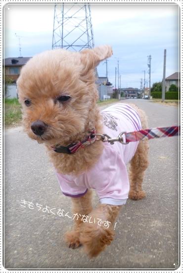 2012,10,17お散歩5