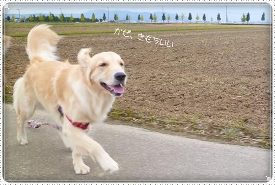 2012,10,17お散歩4