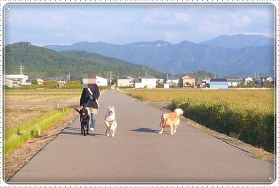 2012,10,25お散歩3