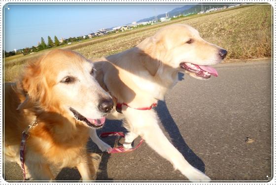 2012,10,25お散歩2