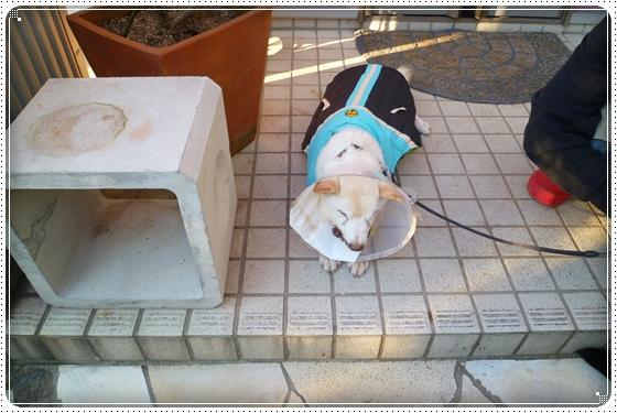 2012,10,25お散歩7