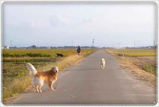 2012,10,26お散歩2