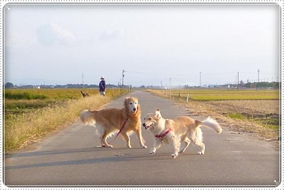 2012,10,26お散歩3