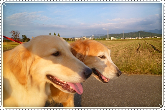 2012,10,26お散歩1