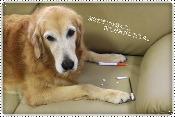 2012,11,5お散歩3