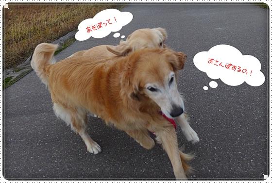 2012,11,19お散歩6