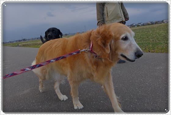 2012,11,19お散歩2