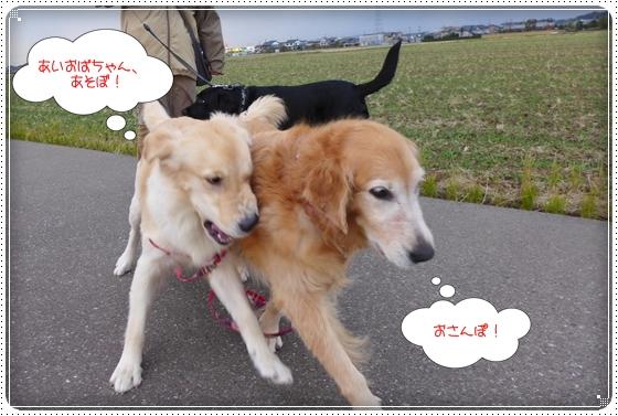 2012,11,19お散歩3
