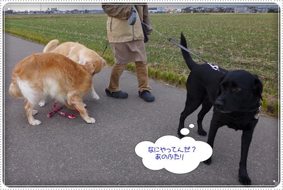 2012,11,19お散歩8