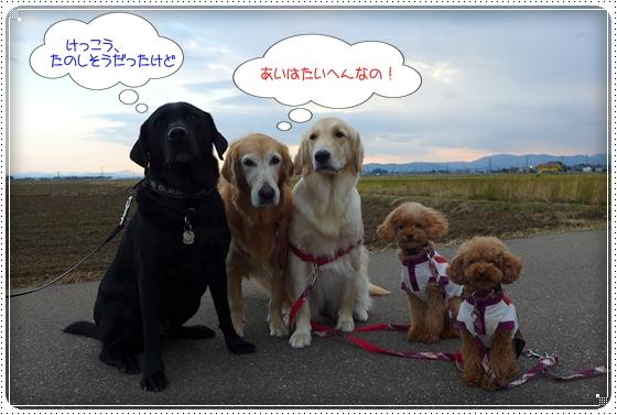 2012,11,19お散歩9