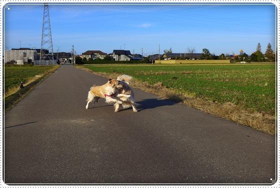 2012,11,21お散歩6