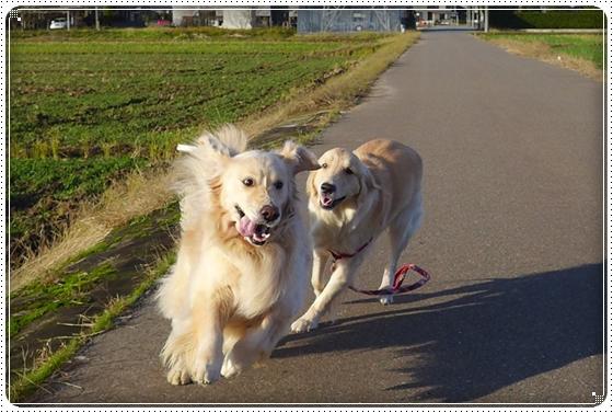 2012,11,21お散歩5