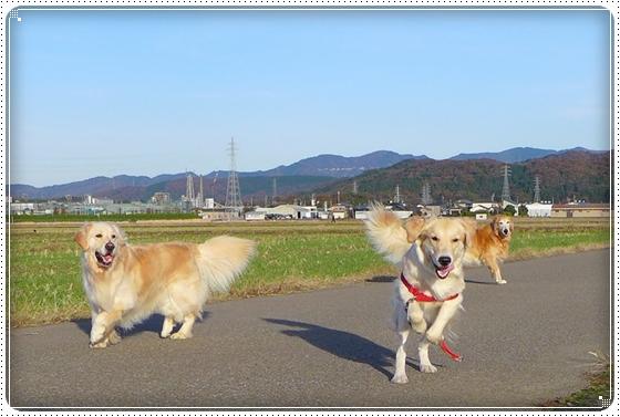 2012,11,21お散歩7
