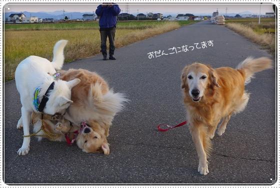2012,11,21お散歩14