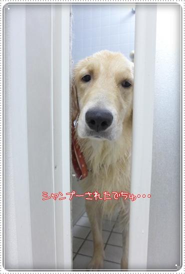 2012,11,29お散歩3
