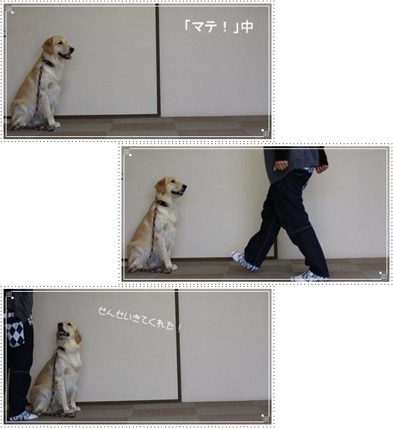 2012,11,29お散歩7