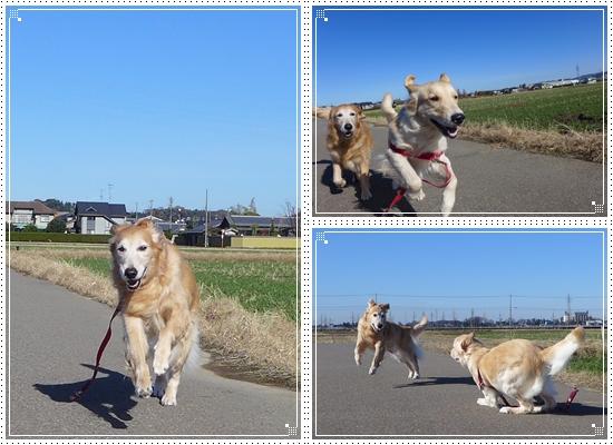 2012,12,3お散歩2