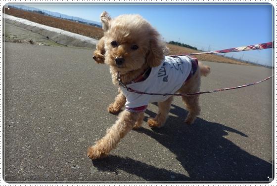 2012,12,3お散歩3