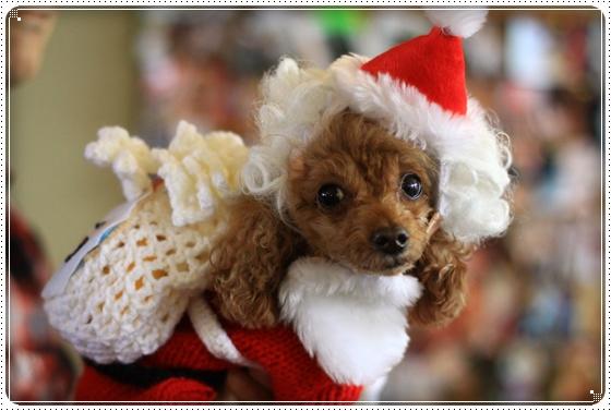 2012,12,10クリスマス会5