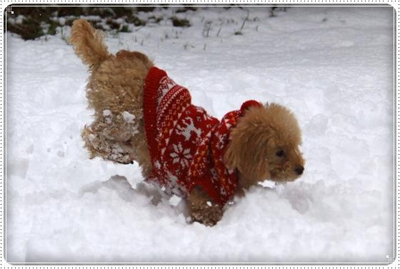 2012,12,24雪遊び5