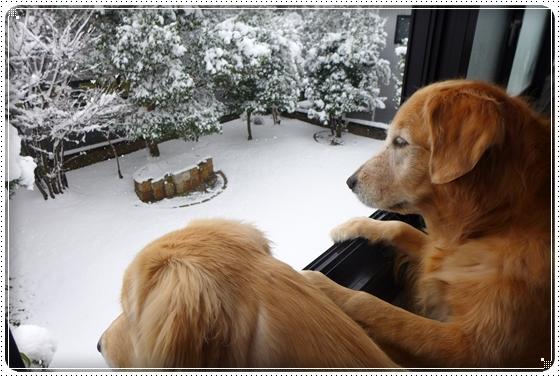 2012,12,24雪遊び1