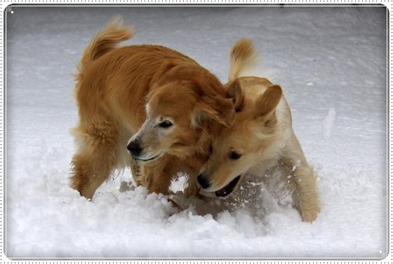 2012,12,24雪遊び4