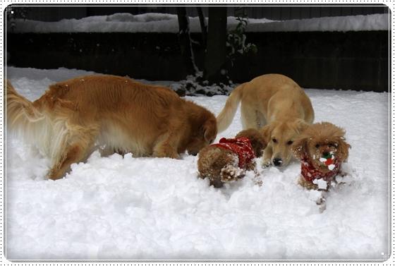 2012,12,24雪遊び2