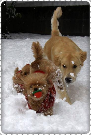 2012,12,24雪遊び3