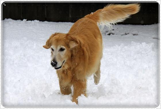 2012,12,24雪遊び12