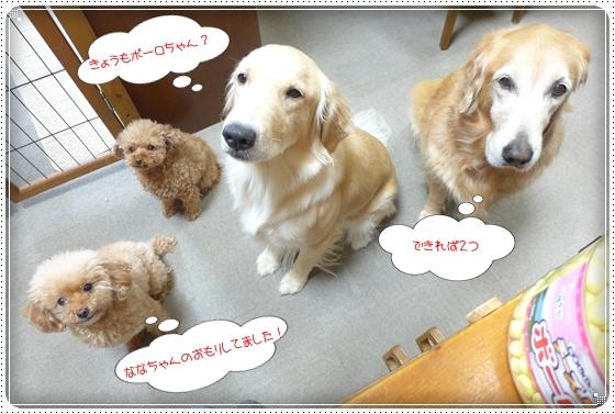 2012,1,8お散歩1