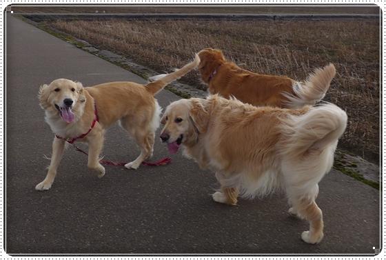2013,2,7お散歩7