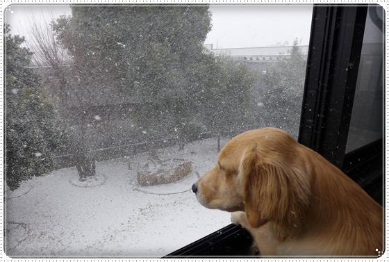 2013,2,8雪1