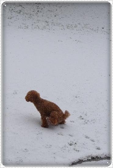 2013,2,8雪8