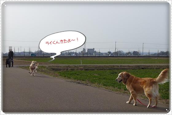 2013,3,7お散歩2