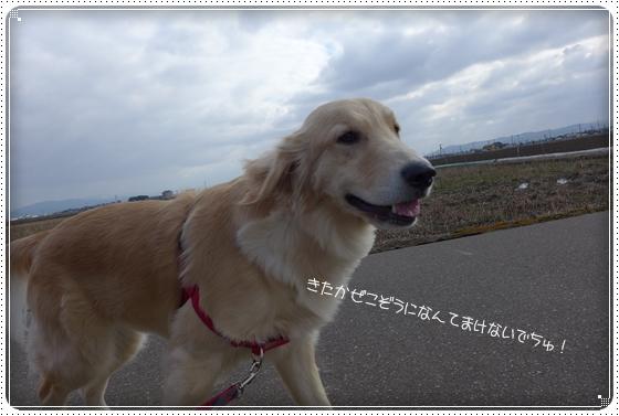 2013,3,14お散歩5