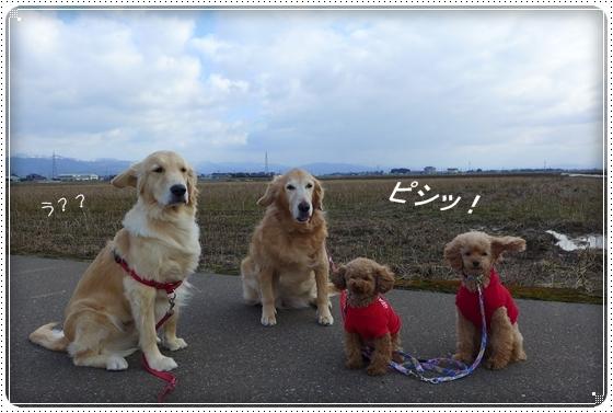2013,3,14お散歩1