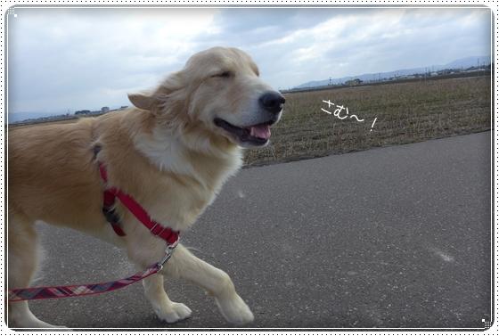 2013,3,14お散歩3