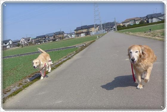 2013,3,16お散歩1