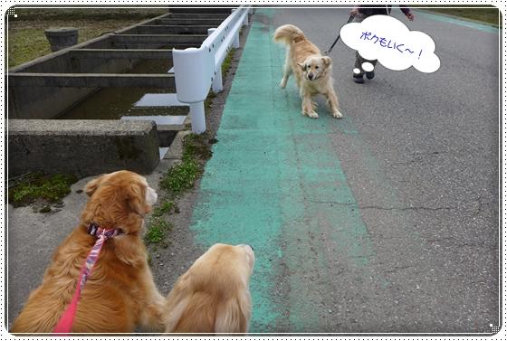 2013,3,28お散歩1