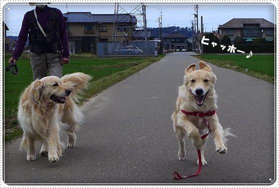 2013,3,28お散歩10