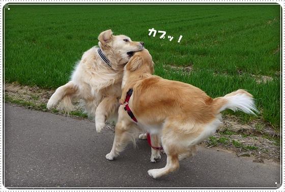 2013,3,28お散歩9