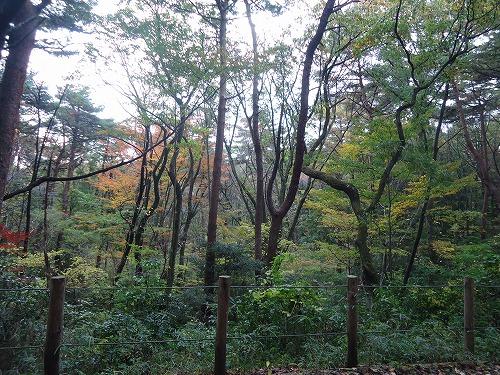 1411dainohara004.jpg